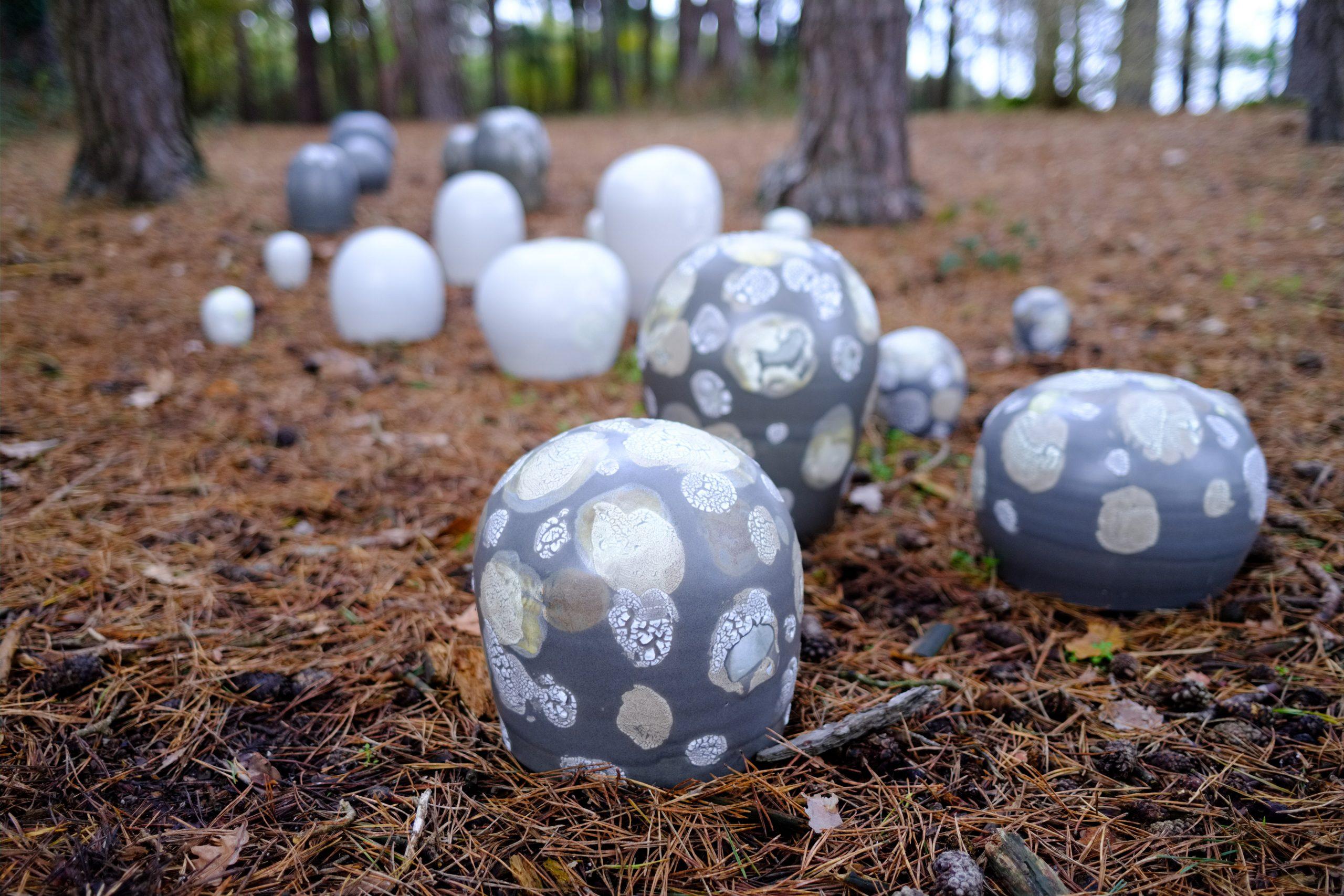 Lichen forms - Linda Bloomfield